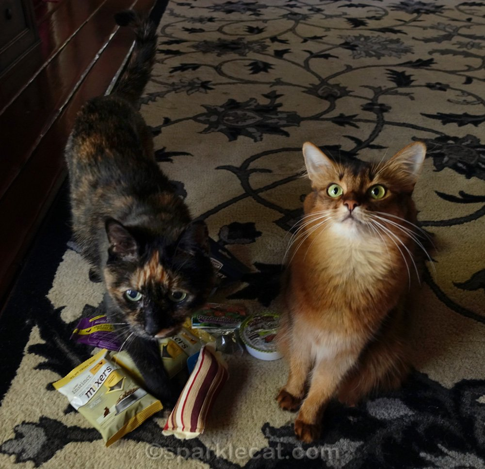 somali cat and tortoiseshellcat with giveaway prizes