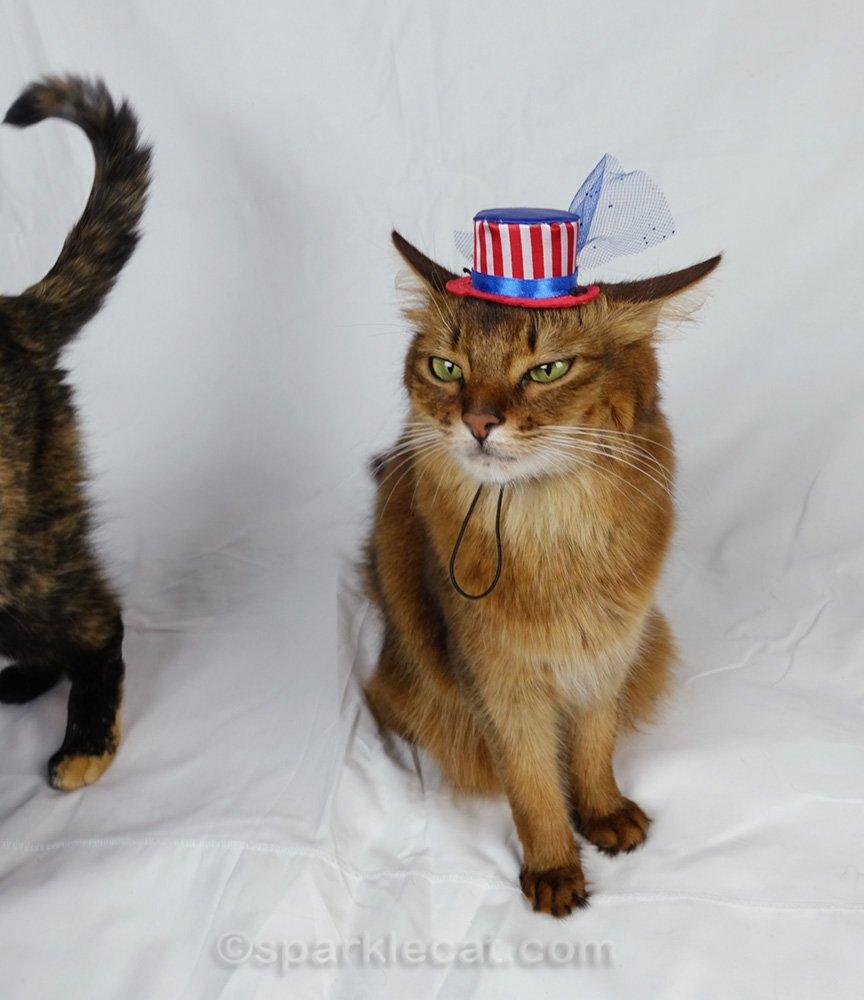 somali cat in uncle sam hat really annoyed about tortoiseshell cat photo bomb