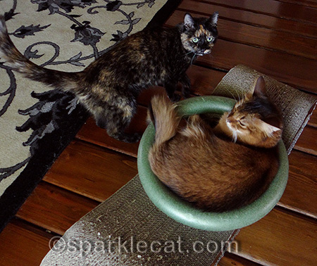 Maybe circles really do attract cats