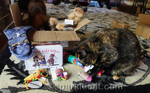 somali cat and tortoiseshell cat do prize package quality control