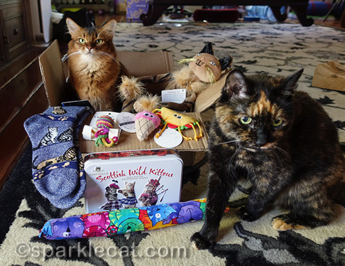 somali cat and tortoiseshell cat with prizes