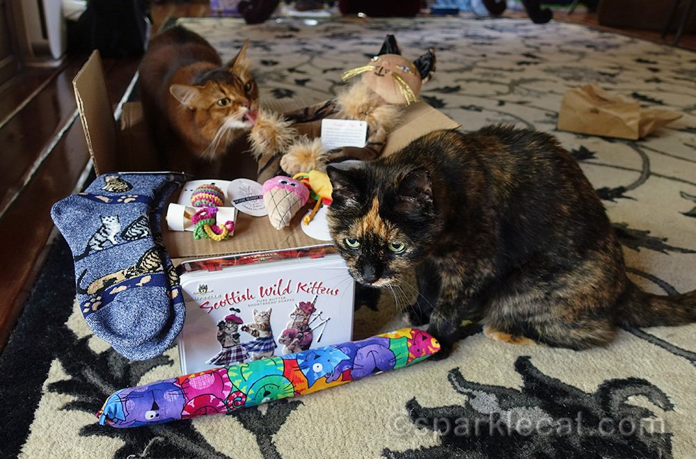 Somali cat and tortoiseshell cat with prizes