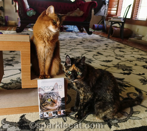 somali cat and tortoiseshell cat with copy of Rescued 2