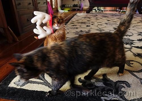 tortoiseshell cat photobombing somali cat in antler headgear