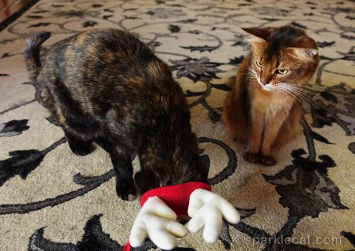 somali cat looks on incredulously at tortoiseshell cat wearing reindeer antlers