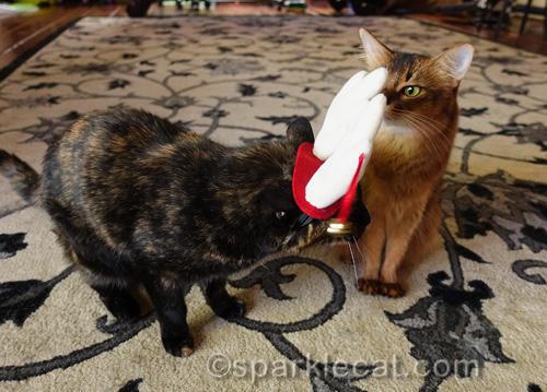 tortoiseshell cat awkwardly wears reindeer antler headgear