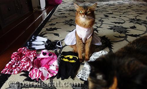 somali cat with wardrobe getting photobombed by tortoiseshell cat