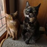 Summer shares some photos of Binga that show off her tortitude for her birthday month.