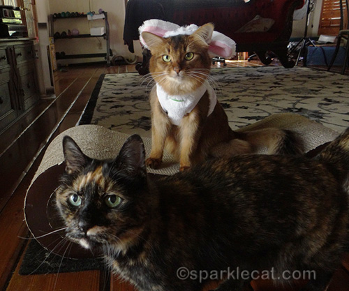 somali cat in bunny costume being photobombed by tortoiseshell cat