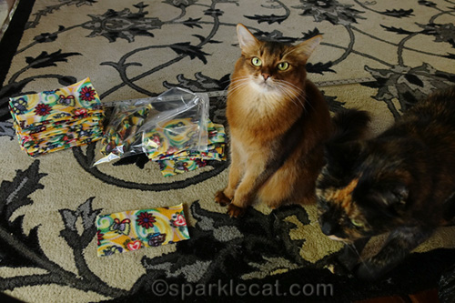 somali cat supervising nip knot making, being photo bombed by tortoiseshell cat