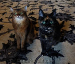 How to Tell if a Tortie Loves You – 7 Tips