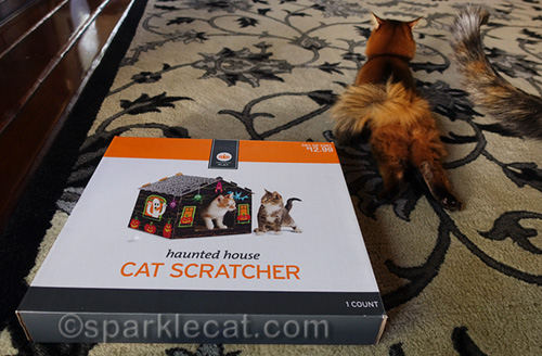 somali cat's back end and haunted house cat scratcher