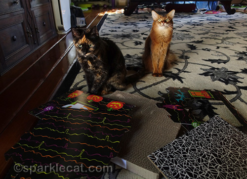 tortoiseshell cat and somali cat ready to supervise assembly