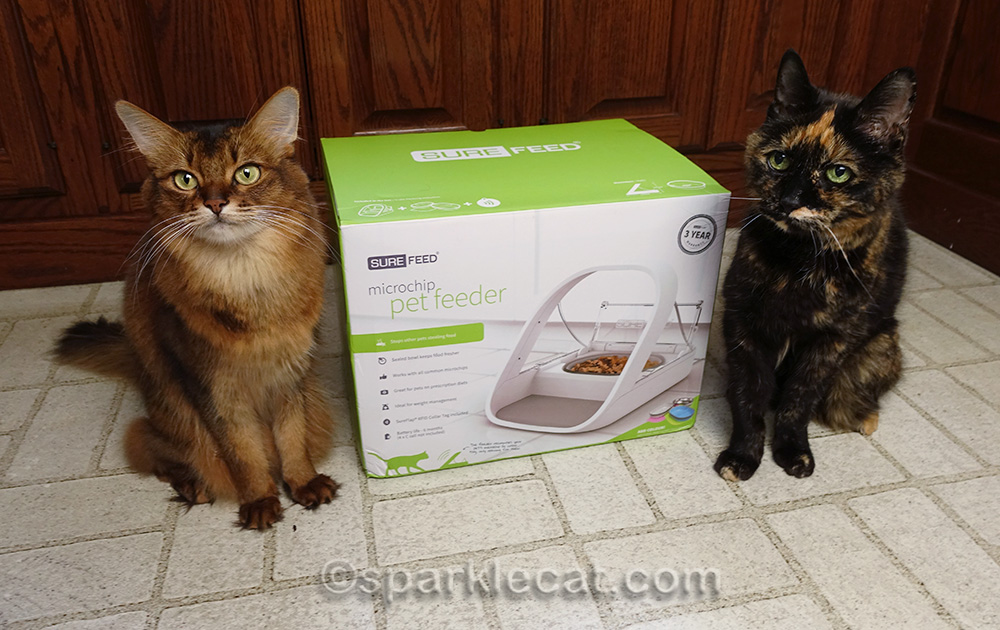 somali cat and tortoiseshell cat posing with SureFeed Microchip Pet Feeder