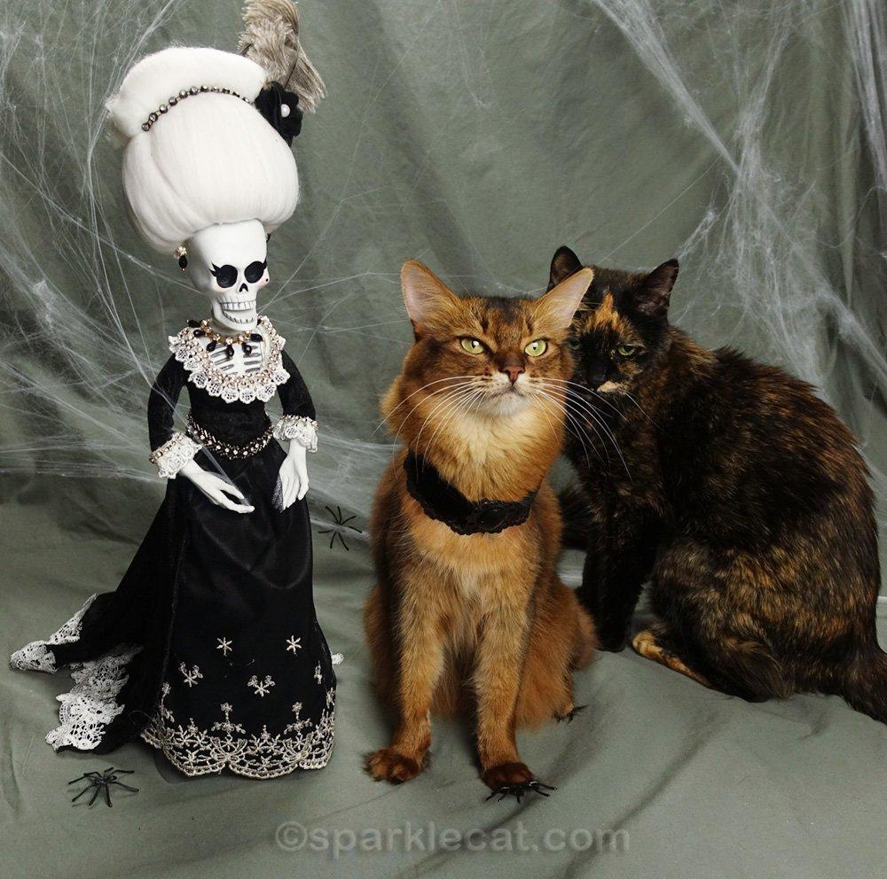 somali cat surrounded by tortoiseshell cat and La Suegra