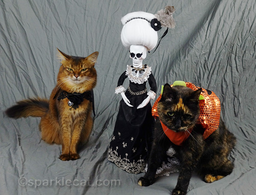 somali cat, tortoiseshell cat in costume and la suegra