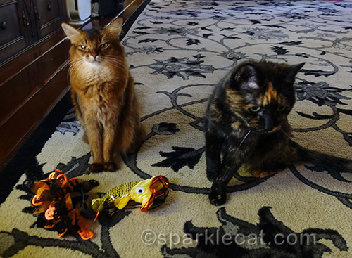 somali cat and tortoiseshell cat with Halloween costumes