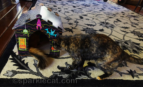 tortoiseshell cat in front of haunted house scratcher with somali cat inside
