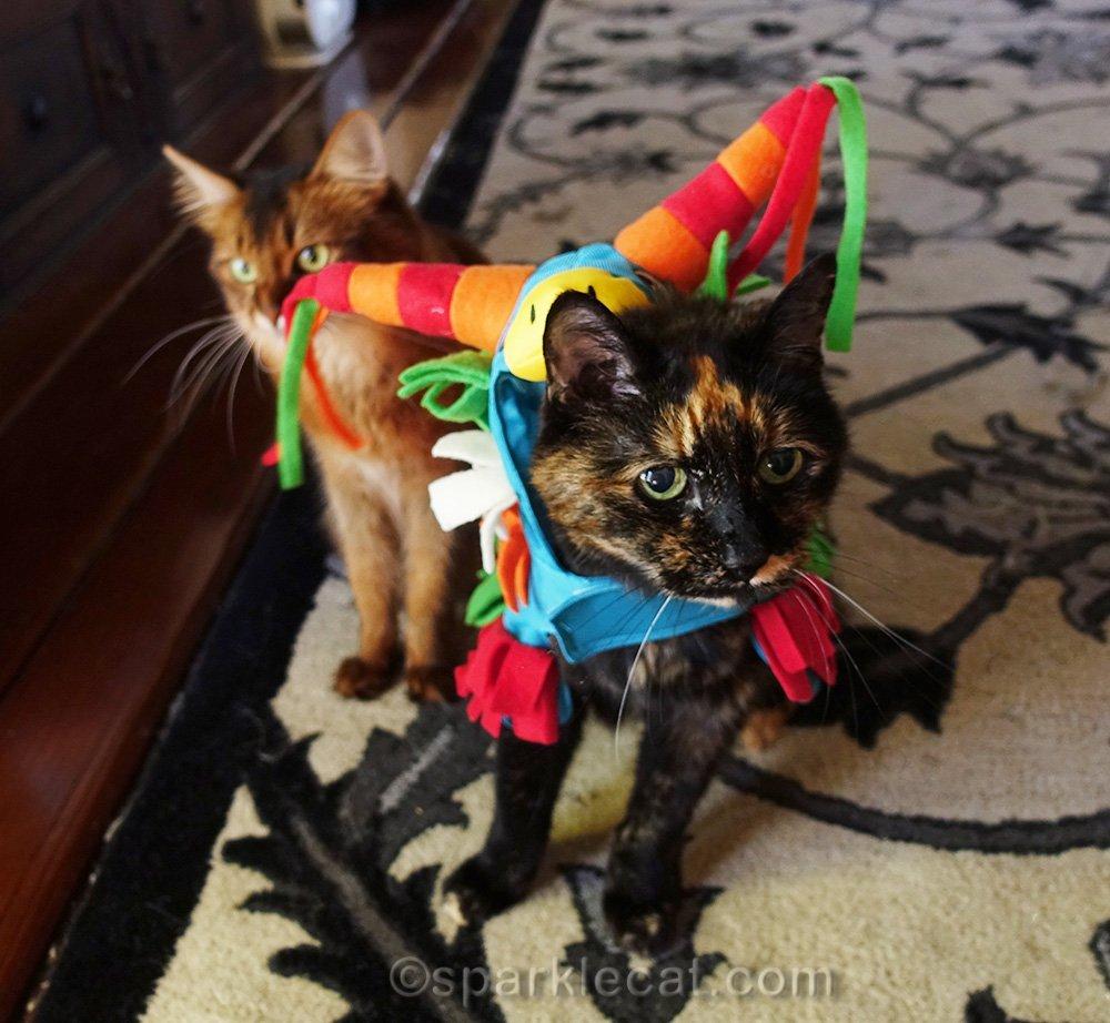 tortoiseshell cat in donkey piñata costume, with somali cat behind her