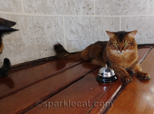 somali cat with desk bell being subtly photo bombed by tortoiseshell cat