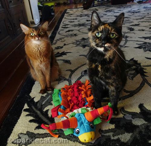 somali cat and tortoiseshell cat with pinata costume