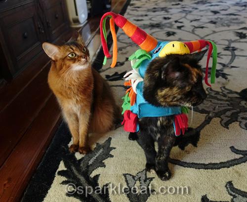 tortoiseshellcat wearing pinata costume and somali cat looking dubious