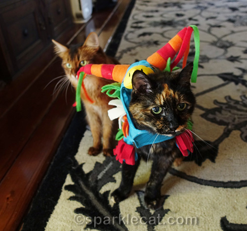 tortoiseshell cat in pinata costume, blocking somali cat