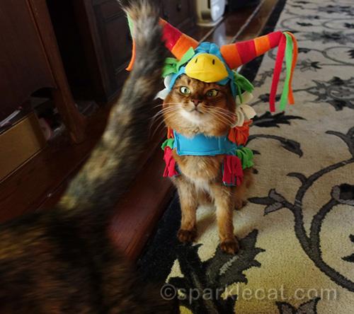 tortoiseshell cat stalks off, with somali cat in pinata costume