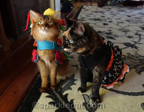 somali cat in pinata dress and tortoiseshell cat in Halloween dress
