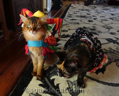 somali cat annoyed about wearing pinata costume