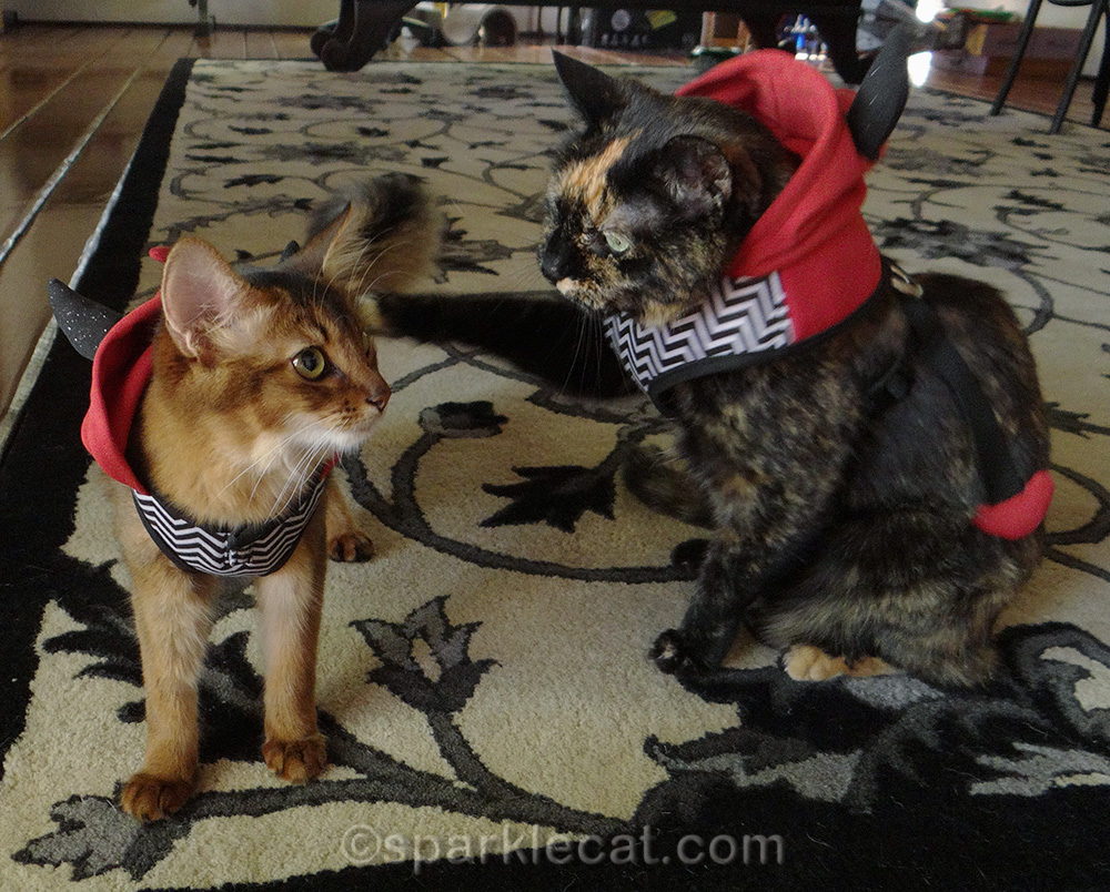somali kitten and tortoiseshell cat wearing devil costumes