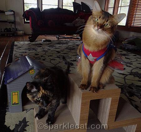 cat costume, cat photography, Somali cat, tortoiseshell cat