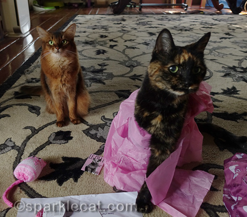 Somali cat and tortoiseshell cat wrapped in pink tissue paper