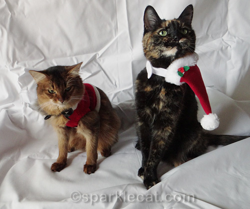 somali cat and tortoiseshell cat pose in holiday cat clothes