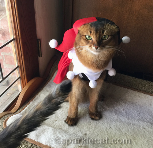 Somali cat taking over costume selfie job and thinking not again