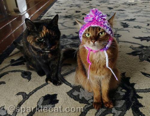 tortoiseshell cat and somali cat wearing chullo hat