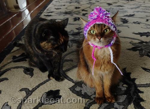 tortoiseshell cat looking at somali cat wearing chullo hat