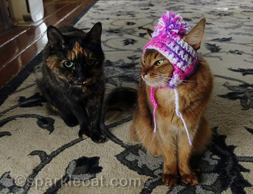 somali cat wearing chullo at looks at tortoiseshell cat