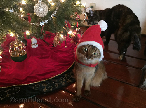 somali cat having difficulty with Santa cat outfit