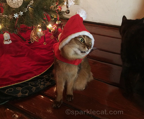 somali cat outtake in Santa cat outfit