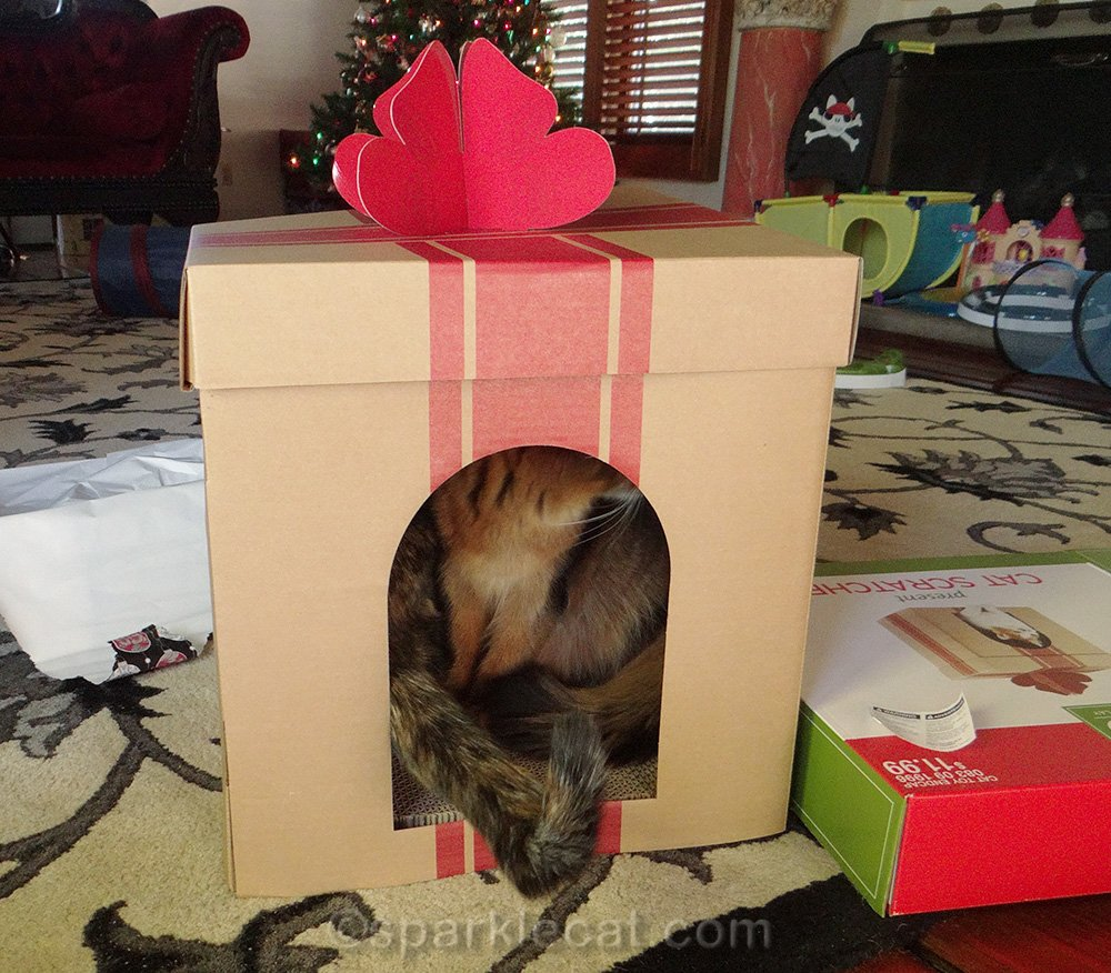 Somali cat and tortoiseshell cat in holiday cat scratcher house