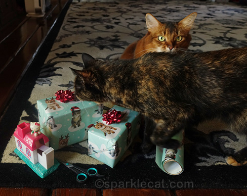 tortoiseshell cat examining presents wrapped by somali cat
