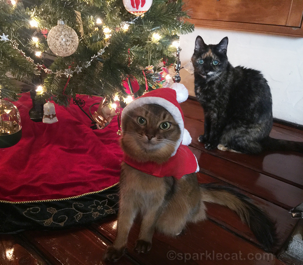 Somali cat in santa outfit and tortoiseshell cat by Christmas tree