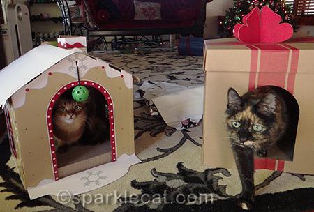 Somali cat, Tortoiseshell cat, target cat scratchers, gingerbread cat scratcher, gift box cat scratcher, kitty christmas gifts