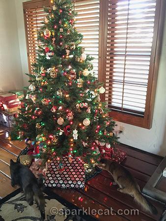 somali cat, tortoiseshell cat, christmas tree