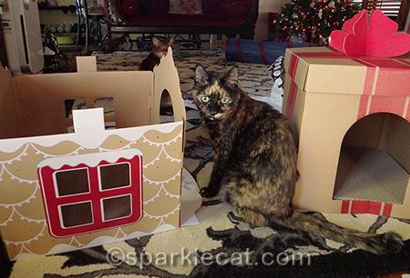 Somali cat, tortoiseshell cats, cat scratcher houses, holiday cat scratchers