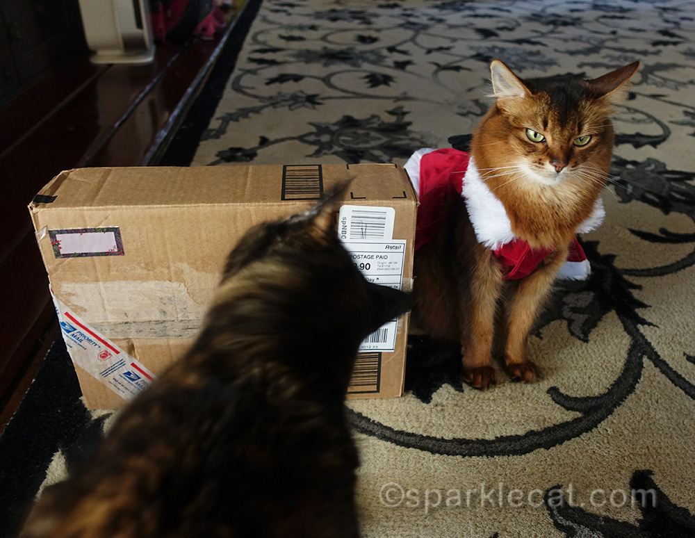 somali cat annoyed at tortoiseshell cat examining her secret paws gifts