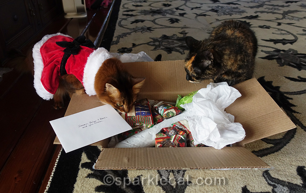 somali cat and tortoiseshell cat looking at Secret Paws gifts