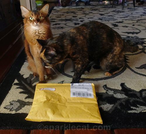 tortoiseshell cat blocking somali cat from her package