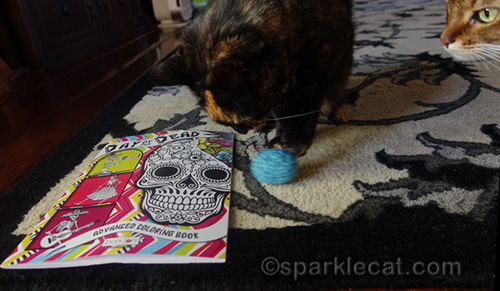 tortoiseshell cat with gifts